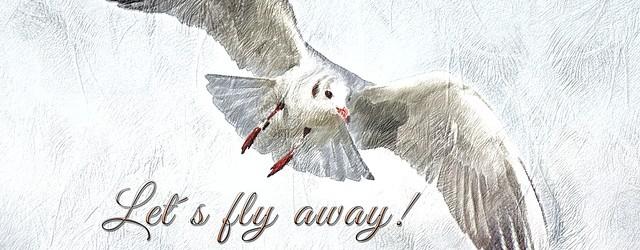 à vol d'oiseau