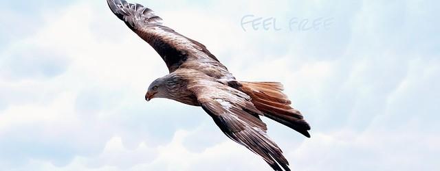Aigle liberté du voyage