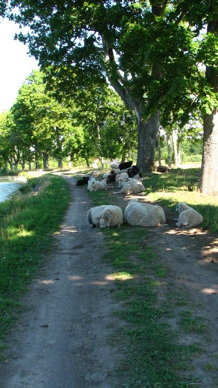 Cyclotourisme sur le Canal Göta kanal vers stockholm
