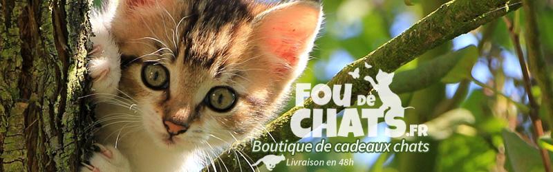 Bannière Fou de chats https://foudechats.fr